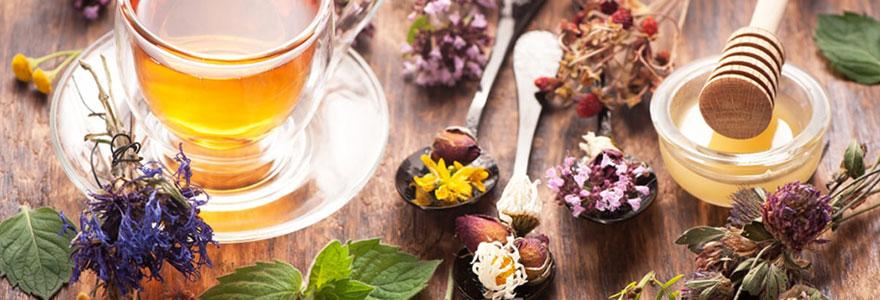 Conseils santé autour des plantes médicinales